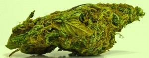 cannabis terapeutica, canapa, farmaci cannabinoidi