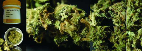 Cannabis ai malati Passa la legge veneta