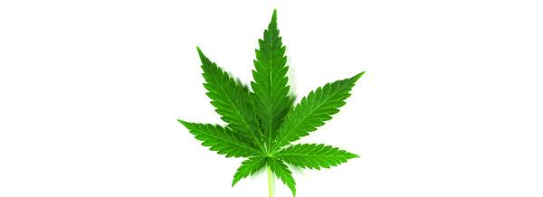 Farmaci cannabinoidi: l'ok delle Marche