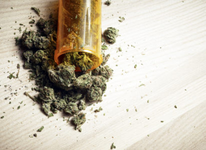 Alla ricerca impossibile della cannabis terapeutica in Friuli
