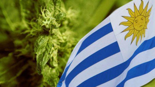 Cannabis: inarrestabile la riforma in Uruguay