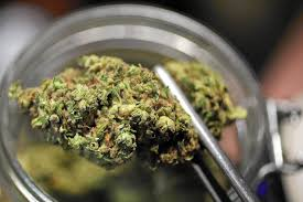Cannabis: se mancano evidenze scientifiche, produciamole con la ricerca!